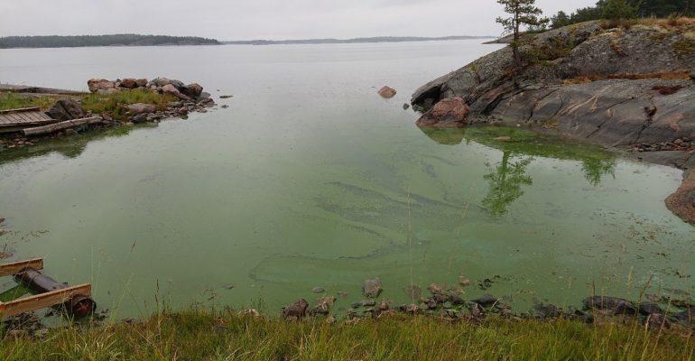 Algblomning i Östersjön